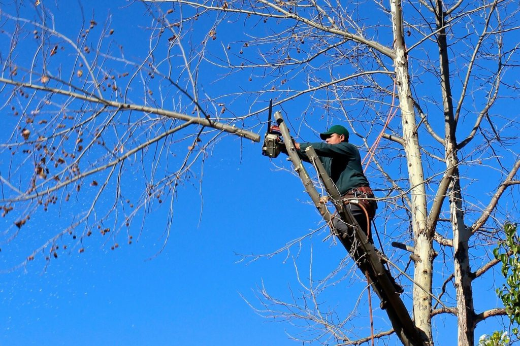 Contact Us-Cooper City FL Tree Trimming and Stump Grinding Services-We Offer Tree Trimming Services, Tree Removal, Tree Pruning, Tree Cutting, Residential and Commercial Tree Trimming Services, Storm Damage, Emergency Tree Removal, Land Clearing, Tree Companies, Tree Care Service, Stump Grinding, and we're the Best Tree Trimming Company Near You Guaranteed!