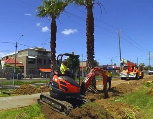 Palm Tree Removal-Cooper City FL Tree Trimming and Stump Grinding Services-We Offer Tree Trimming Services, Tree Removal, Tree Pruning, Tree Cutting, Residential and Commercial Tree Trimming Services, Storm Damage, Emergency Tree Removal, Land Clearing, Tree Companies, Tree Care Service, Stump Grinding, and we're the Best Tree Trimming Company Near You Guaranteed!