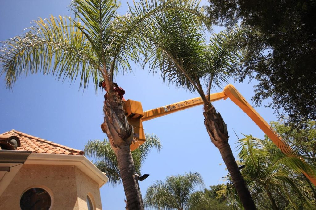 Palm Tree Trimming-Cooper City FL Tree Trimming and Stump Grinding Services-We Offer Tree Trimming Services, Tree Removal, Tree Pruning, Tree Cutting, Residential and Commercial Tree Trimming Services, Storm Damage, Emergency Tree Removal, Land Clearing, Tree Companies, Tree Care Service, Stump Grinding, and we're the Best Tree Trimming Company Near You Guaranteed!