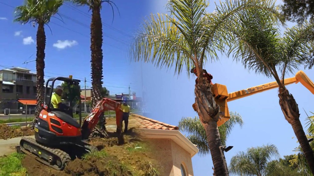 Palm tree trimming & palm tree removal-Cooper City FL Tree Trimming and Stump Grinding Services-We Offer Tree Trimming Services, Tree Removal, Tree Pruning, Tree Cutting, Residential and Commercial Tree Trimming Services, Storm Damage, Emergency Tree Removal, Land Clearing, Tree Companies, Tree Care Service, Stump Grinding, and we're the Best Tree Trimming Company Near You Guaranteed!