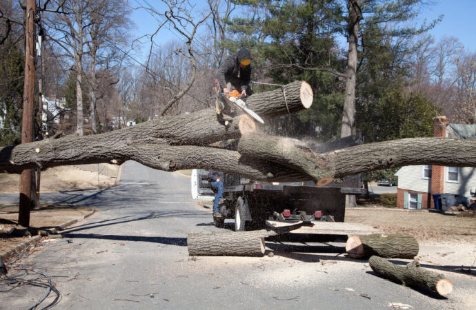 Residential Tree Services-Cooper City FL Tree Trimming and Stump Grinding Services-We Offer Tree Trimming Services, Tree Removal, Tree Pruning, Tree Cutting, Residential and Commercial Tree Trimming Services, Storm Damage, Emergency Tree Removal, Land Clearing, Tree Companies, Tree Care Service, Stump Grinding, and we're the Best Tree Trimming Company Near You Guaranteed!