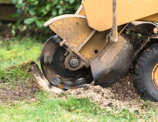 Stump Grinding-Cooper City FL Tree Trimming and Stump Grinding Services-We Offer Tree Trimming Services, Tree Removal, Tree Pruning, Tree Cutting, Residential and Commercial Tree Trimming Services, Storm Damage, Emergency Tree Removal, Land Clearing, Tree Companies, Tree Care Service, Stump Grinding, and we're the Best Tree Trimming Company Near You Guaranteed!