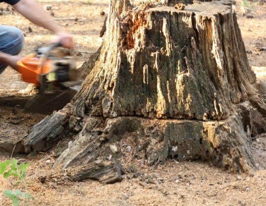 Stump Removal-Cooper City FL Tree Trimming and Stump Grinding Services-We Offer Tree Trimming Services, Tree Removal, Tree Pruning, Tree Cutting, Residential and Commercial Tree Trimming Services, Storm Damage, Emergency Tree Removal, Land Clearing, Tree Companies, Tree Care Service, Stump Grinding, and we're the Best Tree Trimming Company Near You Guaranteed!