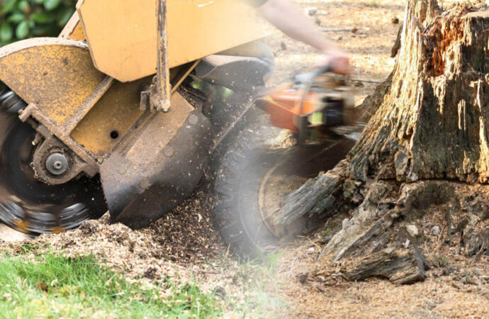 Stump grinding & removal-Cooper City FL Tree Trimming and Stump Grinding Services-We Offer Tree Trimming Services, Tree Removal, Tree Pruning, Tree Cutting, Residential and Commercial Tree Trimming Services, Storm Damage, Emergency Tree Removal, Land Clearing, Tree Companies, Tree Care Service, Stump Grinding, and we're the Best Tree Trimming Company Near You Guaranteed!
