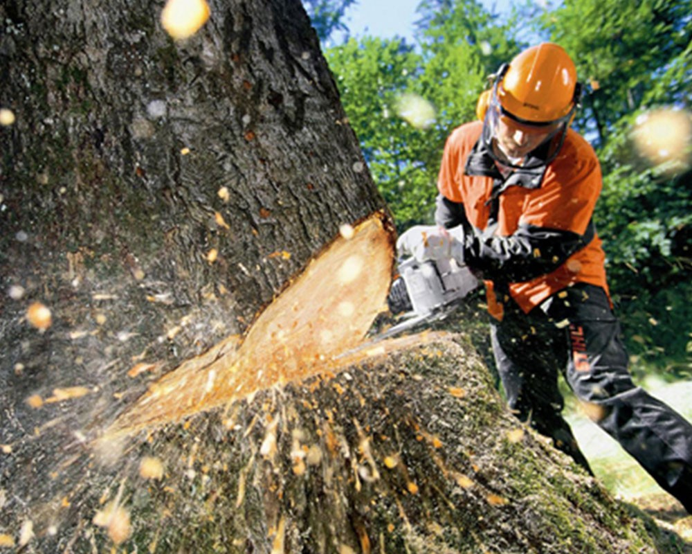 Tree Cutting-Cooper City FL Tree Trimming and Stump Grinding Services-We Offer Tree Trimming Services, Tree Removal, Tree Pruning, Tree Cutting, Residential and Commercial Tree Trimming Services, Storm Damage, Emergency Tree Removal, Land Clearing, Tree Companies, Tree Care Service, Stump Grinding, and we're the Best Tree Trimming Company Near You Guaranteed!