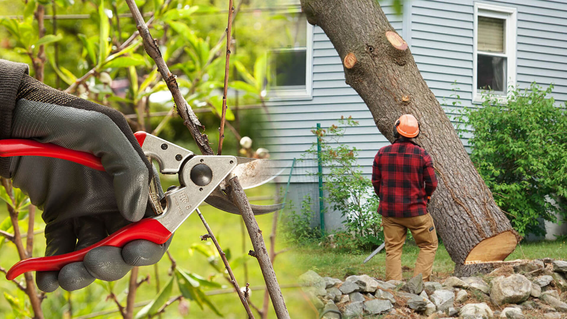 Tree pruning & tree removal-Cooper City FL Tree Trimming and Stump Grinding Services-We Offer Tree Trimming Services, Tree Removal, Tree Pruning, Tree Cutting, Residential and Commercial Tree Trimming Services, Storm Damage, Emergency Tree Removal, Land Clearing, Tree Companies, Tree Care Service, Stump Grinding, and we're the Best Tree Trimming Company Near You Guaranteed!